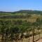 African wine vineyards
