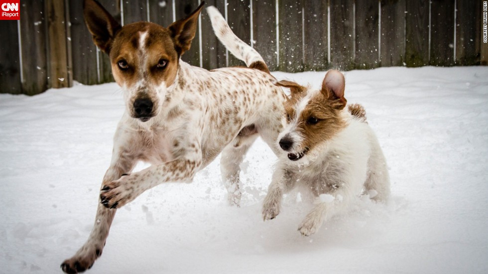 "A little snow won't stop <a href=""http://www.cnn.com/2014/01/04/us/irpt-dogs-in-the-snow/index.html"">these two from enjoying</a> a run in northeast Ohio on January 6."