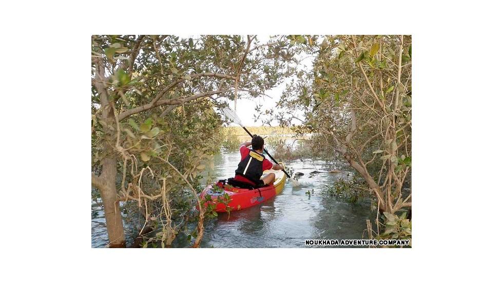 Paseos en kayak entre los manglares en Abu Dhabi