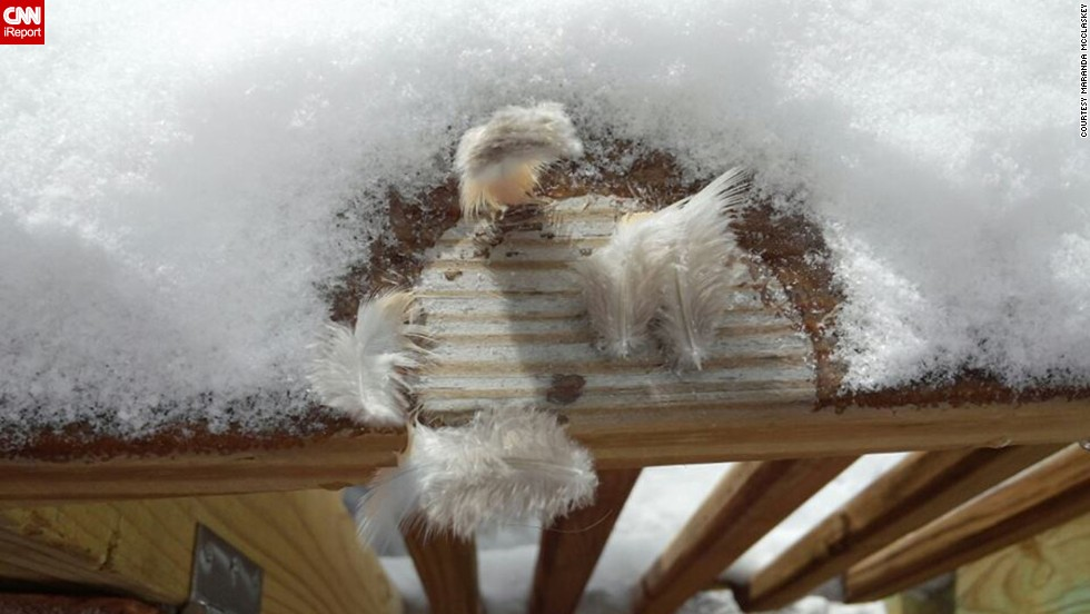 "Maranda McClaskey knew the birds in Harrisville, West Virginia, would appreciate extra food in the chilly weather on January 6. But when one poor bird landed on her porch to eat, it got stuck to the ice! Finally the bird managed to free itself -- but it <a href=""http://ireport.cnn.com/docs/DOC-1072981"">left these feathers behind</a>."