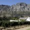 south african vineyard Franschoek