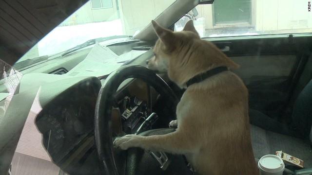 dnt pup on a joyride _00010305.jpg