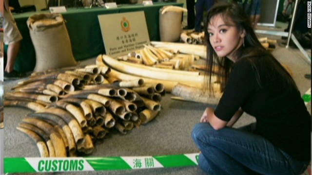 Activist battles illegal ivory trade