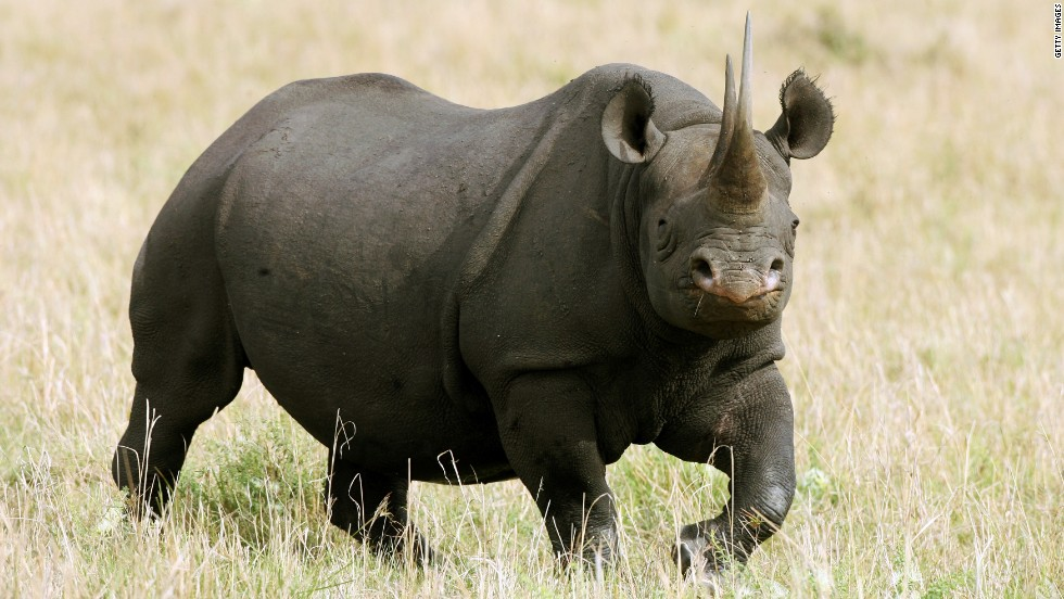 "Our emotional connection to animals is so strong that people have threatened to take a human life when an animal's existence is at stake. In January 2014, a safari club in the United States auctioned a <a href=""http://edition.cnn.com/2014/01/16/us/black-rhino-hunting-permit/?hpt=us_r1"">permit to hunt a rare, but old, black rhino</a>, with the endorsement of the world's largest group of conservation scientists, the IUCN . The winner, who bought the permit for $350,000, had to hire private security detail after his family received death threats."