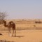 Camel and cyclists in Sudan