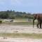 elephants without borders 2