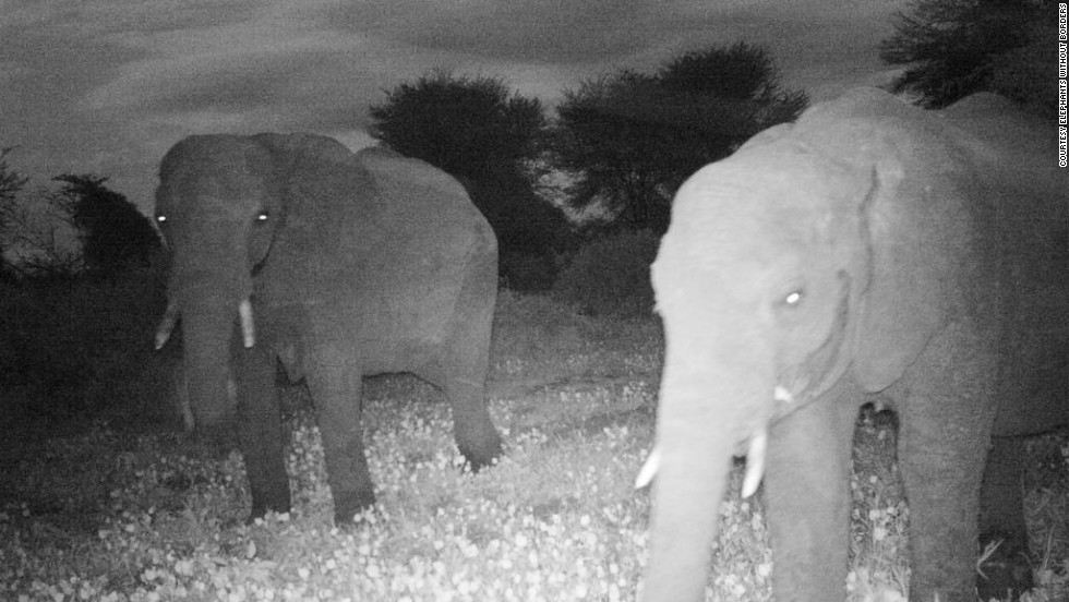 With the help of motion-detection cameras, Adams is looking at the effectiveness of small-scale wildlife corridors and whether they can help avoid human-wildlife conflict.