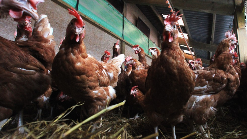 "<strong>December 11, 2013:</strong> The FDA <a href=""http://www.cnn.com/2013/12/11/health/fda-antibiotics-farms/"">announces</a> it wants to phase out the use of certain antibiotics in food-producing animals."