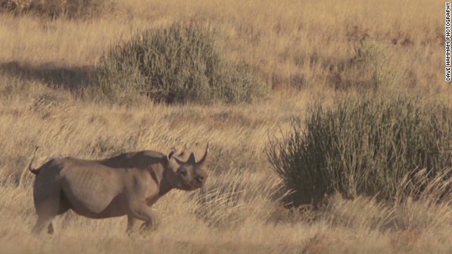 Should rhino hunter be hunted?