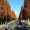 China bike smog trees