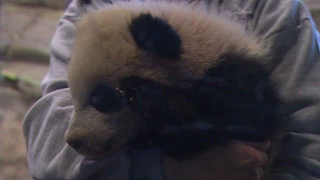 Panda cub makes National Zoo debut