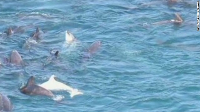 Japan reacts to critique of dolphin hunt