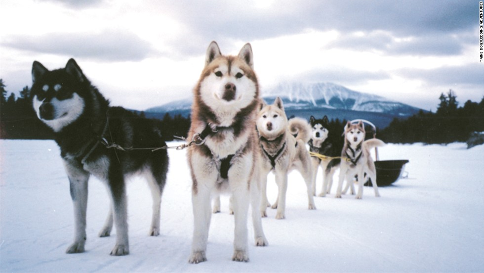 Learn how professional mushers lead their dog teams on beginner dog sledding trips in Maine.