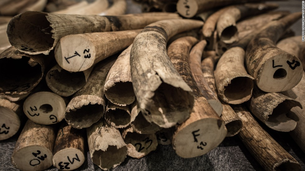 Ivory tusks seized by the Hong Kong Customs in a series of anti-smuggling operations last year are expected to be demolished soon.