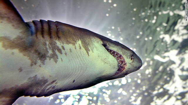 Shark cull aims to end attacks