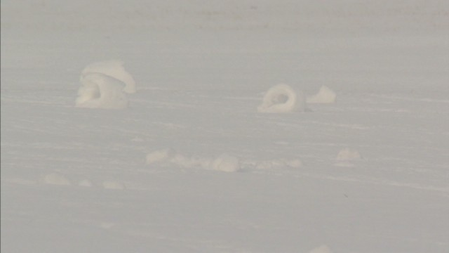 dnt ohio snow rollers appear_00000422.jpg