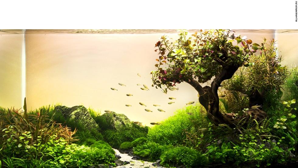 Transforma tu pecera el misterioso mundo del paisajismo for Peceras de jardin