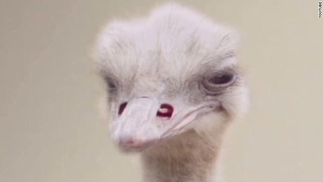 mxp sot doritos super bowl ostrich ad_00002718.jpg