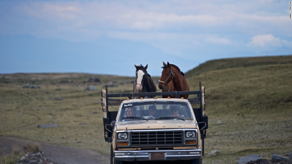 Feral horses roam the plains of Cotopaxi. Others work in the service of the chagras.