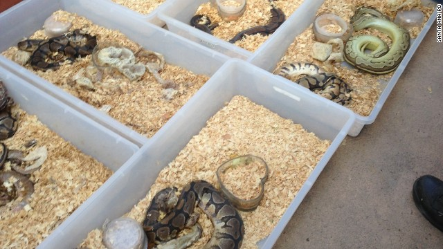 Hundreds of snakes, most of them dead, were found in the home of a man in Santa Ana, California.
