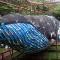 flip flop whale ocean sole nairobi