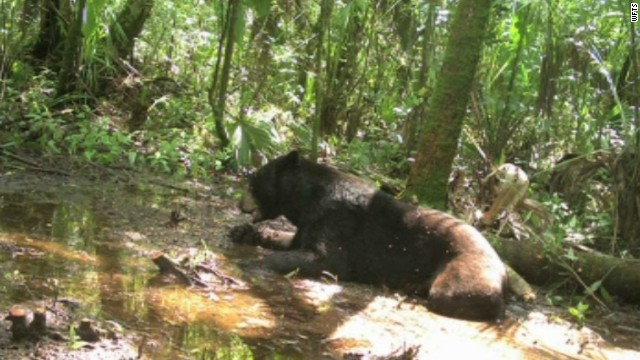 Woman, 81,  jailed for feeding bears