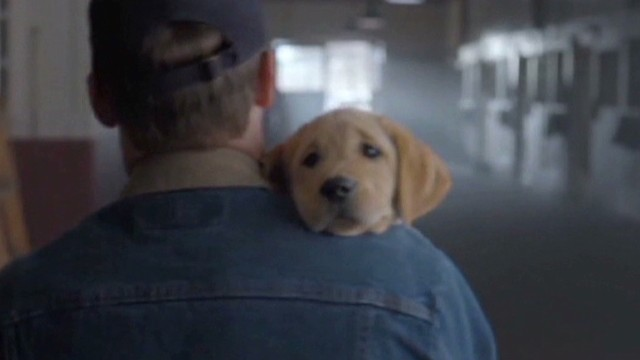 nr vo super bowl ads puppies beckham_00003019.jpg