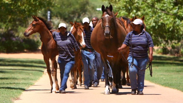 Making S. Africa an equestrian power