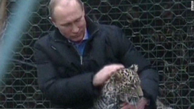 Putin cozies up with snow leopards