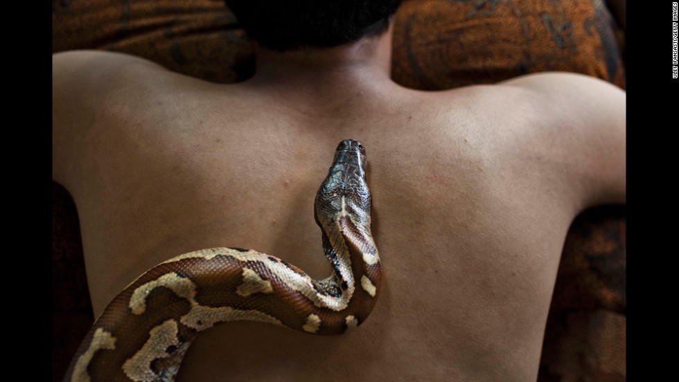A python crawls up a staff member's back at the Bali Heritage Reflexology and Spa in Jakarta, Indonesia, in October 2013. The spa offers a unique massage treatment that involves having several pythons placed on the customer's body. The movement of the snakes and the adrenaline triggered by fear is said to have a positive impact on the customer's metabolism.