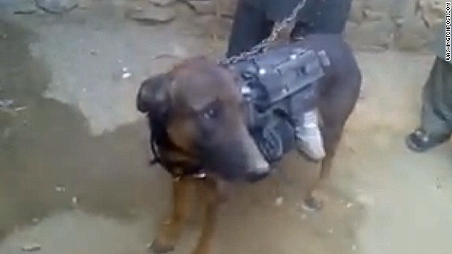 U.S.: Taliban-captured dog is British