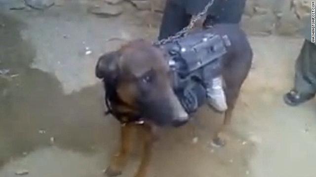 U.S.: Taliban-captured dog is British