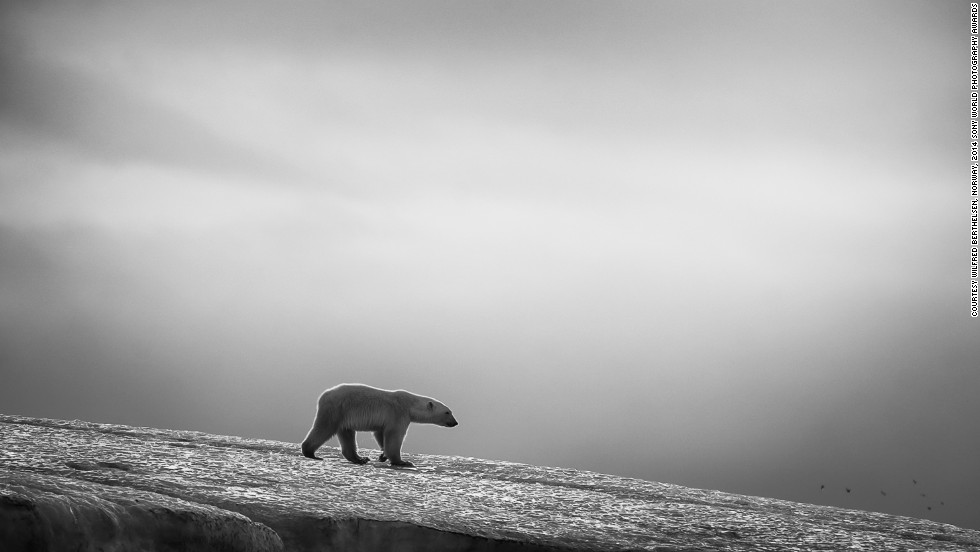 "<strong>Finalist: Bears and Birds</strong><br />Photo and caption by Wilfred Berthelsen<br />""This is a series of images in black and white taken at Svalbard."""