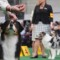 13 westminster kennel club dog show 0210