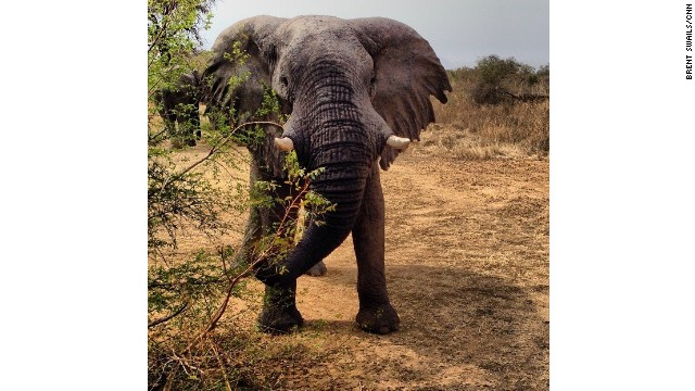 Zakouma's elephant population has been decimated by poaching. In 2002 there were more than 4,000 elephants in the park, today just 450.