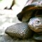 branson island turtle
