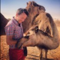UAE Camel Love Scenes from the field