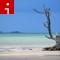 beaches bahamas