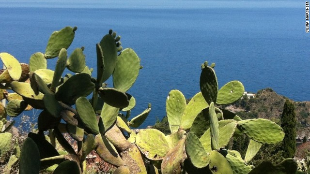 Prickly pears: your (silent) Alicudi companions.