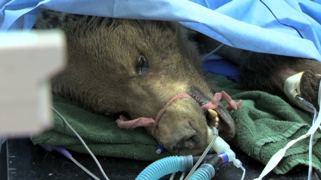 bts bear goes through surgery_00000326.jpg
