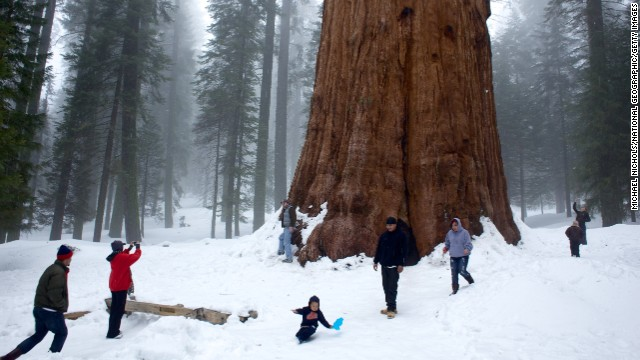 Largest living tree: Named after General Sherman after the Civil War general, this behemoth lives in the north end of Giant Forrest in Sequoia National Park, California.