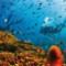 vanishing wilflife experiences barrier reef