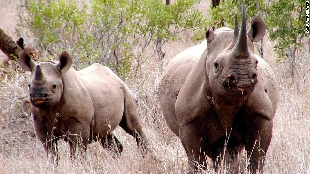 Minus rhinos, Big Five will become Big Four.