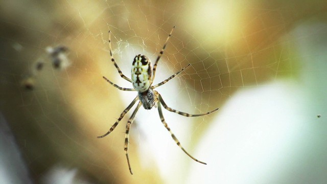 Can spider silk help you self-heal?