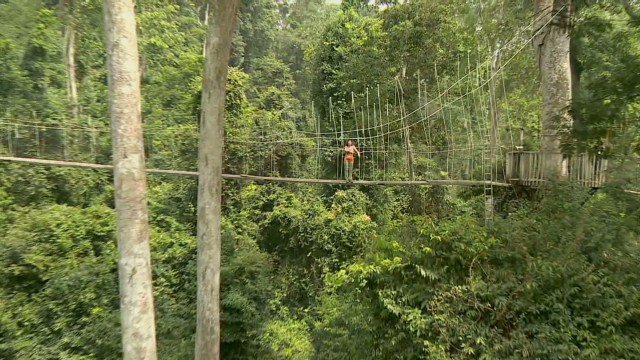 Ghana's treetop tightrope