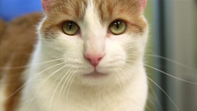 exp orig cat whisperer _00014026.jpg