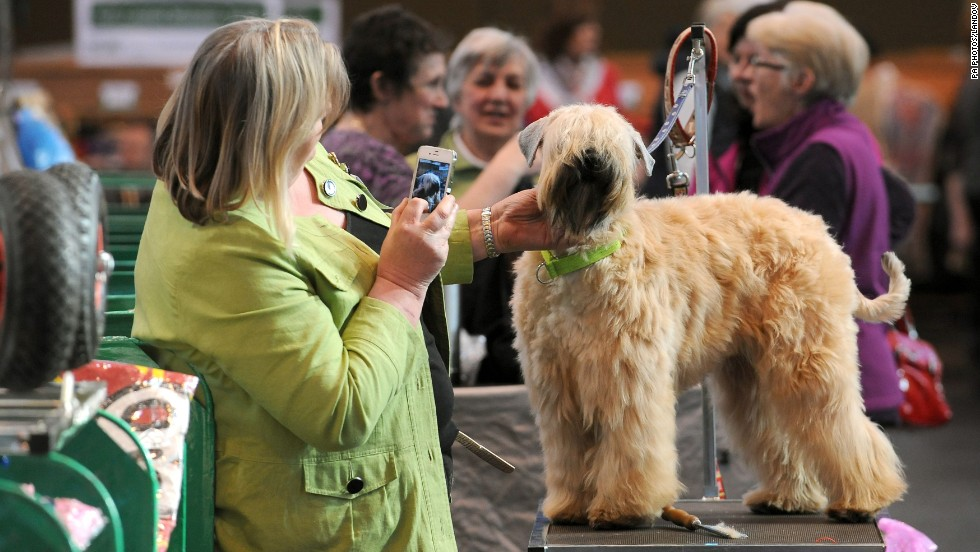 Dale Bowcott takes a picture of her soft-coated wheaten terrier, Chia, on March 7. This year, more than 2,650 dogs from 48 countries are expected to compete in the event.