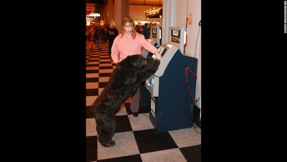 A dog plays near an ATM on March 6.