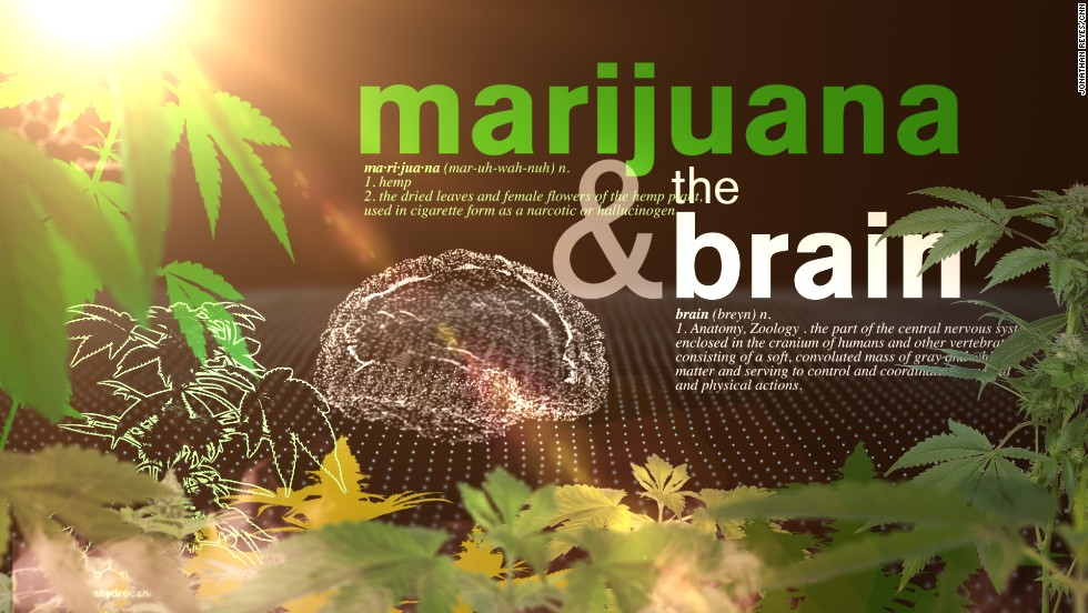 Your brain on weed