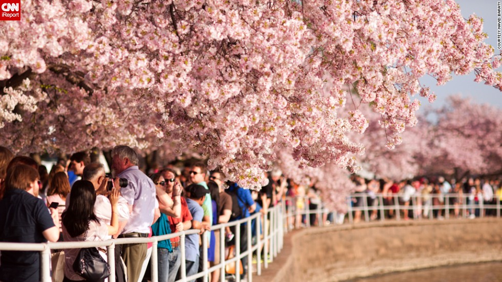 """The <a href=""""http://www.nationalcherryblossomfestival.org/about/history/"""" target=""""_blank"""">National Cherry Blossom Festival </a>grew from humble beginnings, but now it's one of the largest springtime celebrations in the United States."""